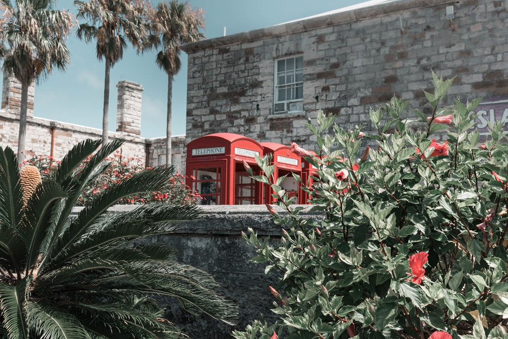red telephone booth near green leaf tree during daytime