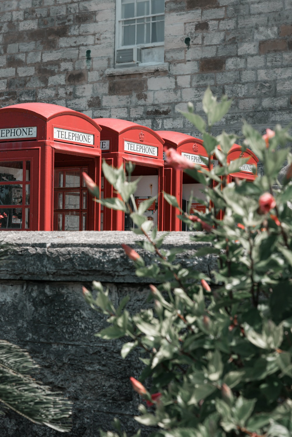 red telephone booth beside green plants