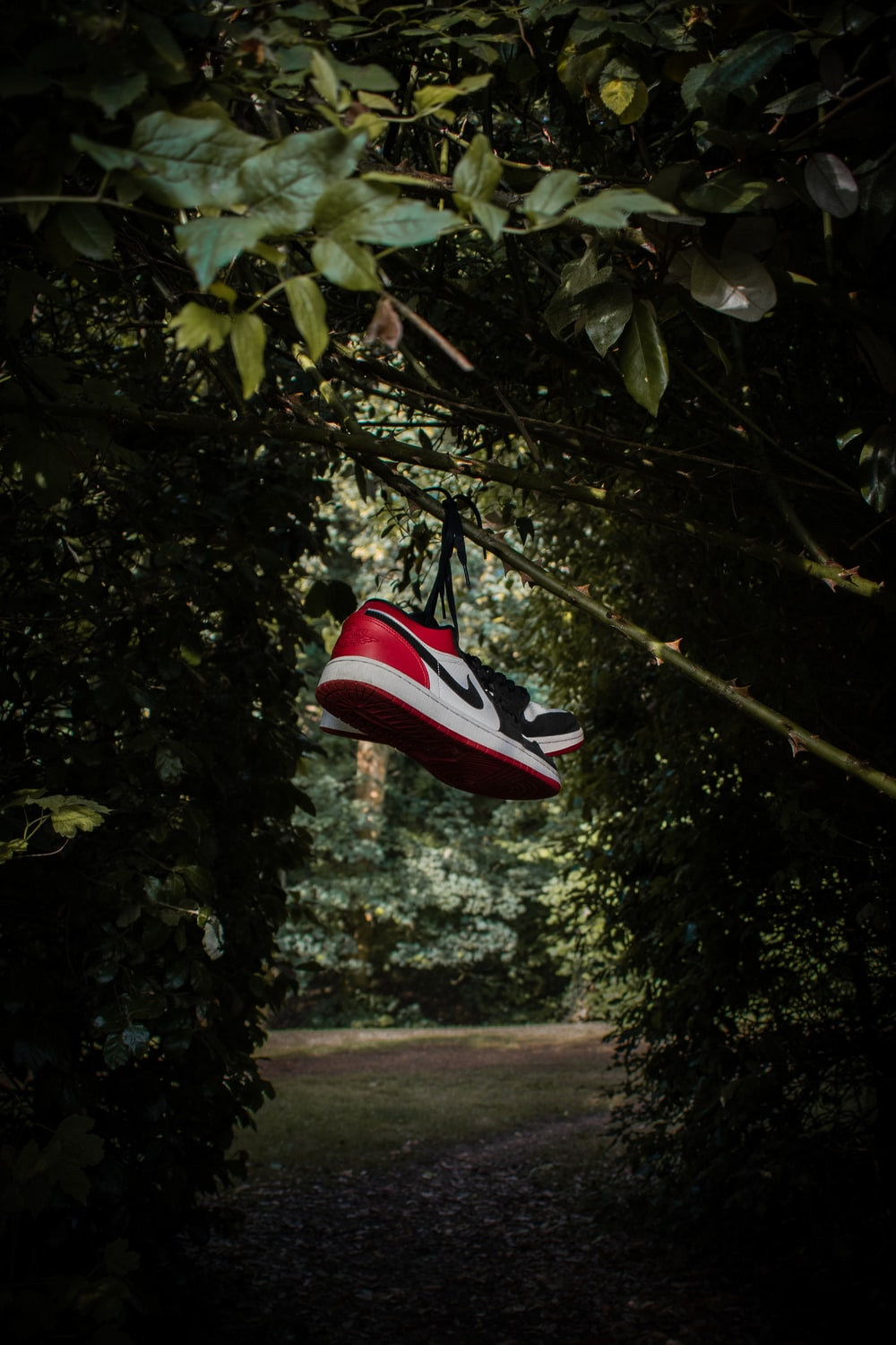 red and white nike athletic shoes on tree branch