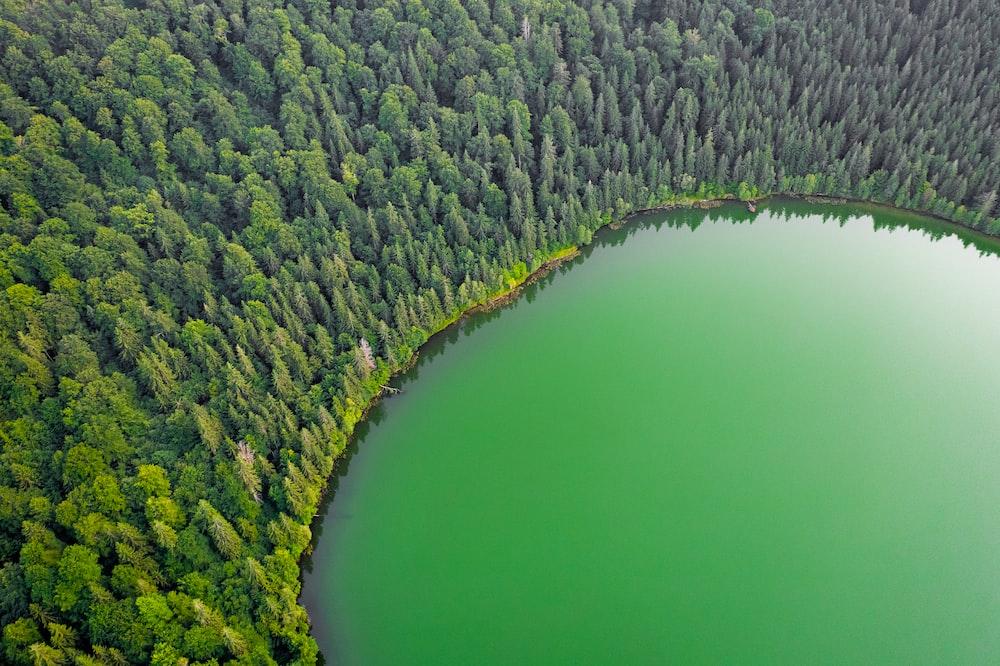 green lake beside green trees during daytime