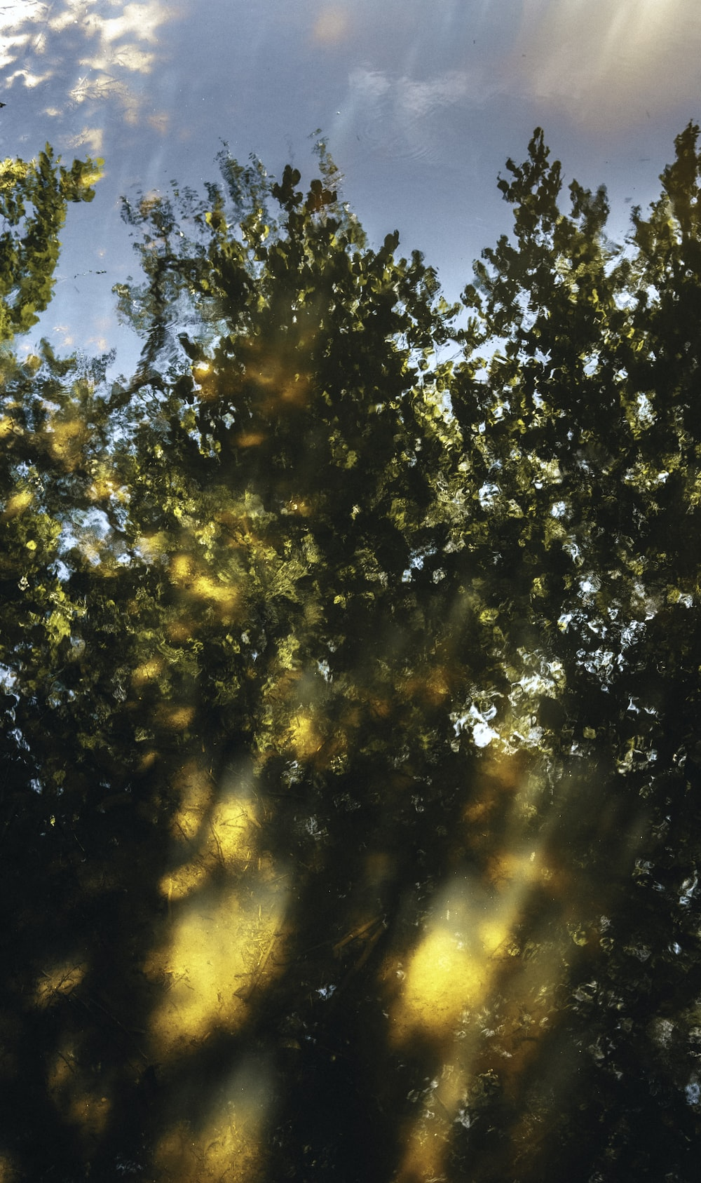 green and yellow tree during daytime