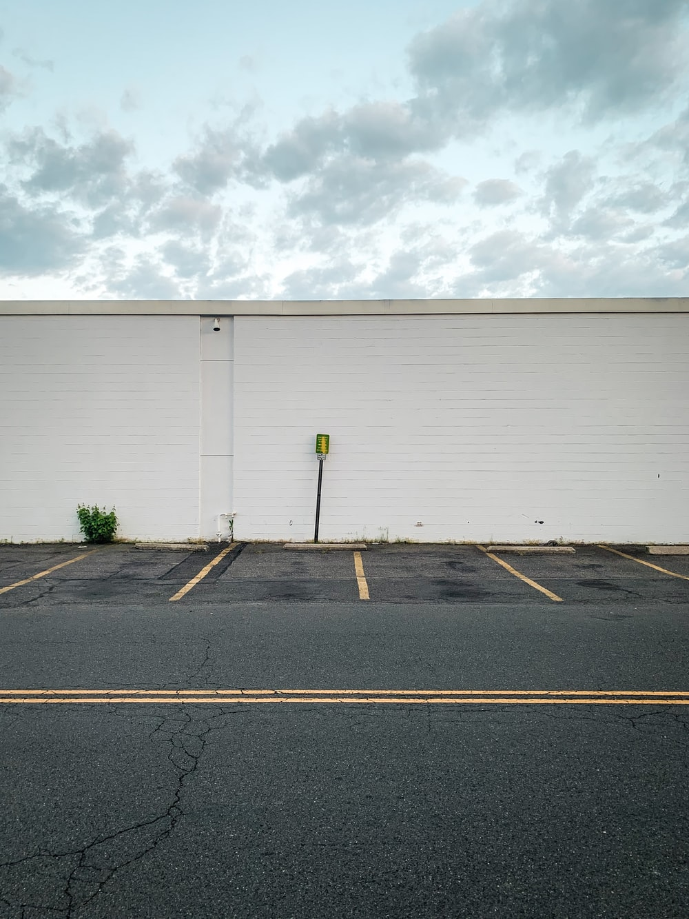white garage door near green plants