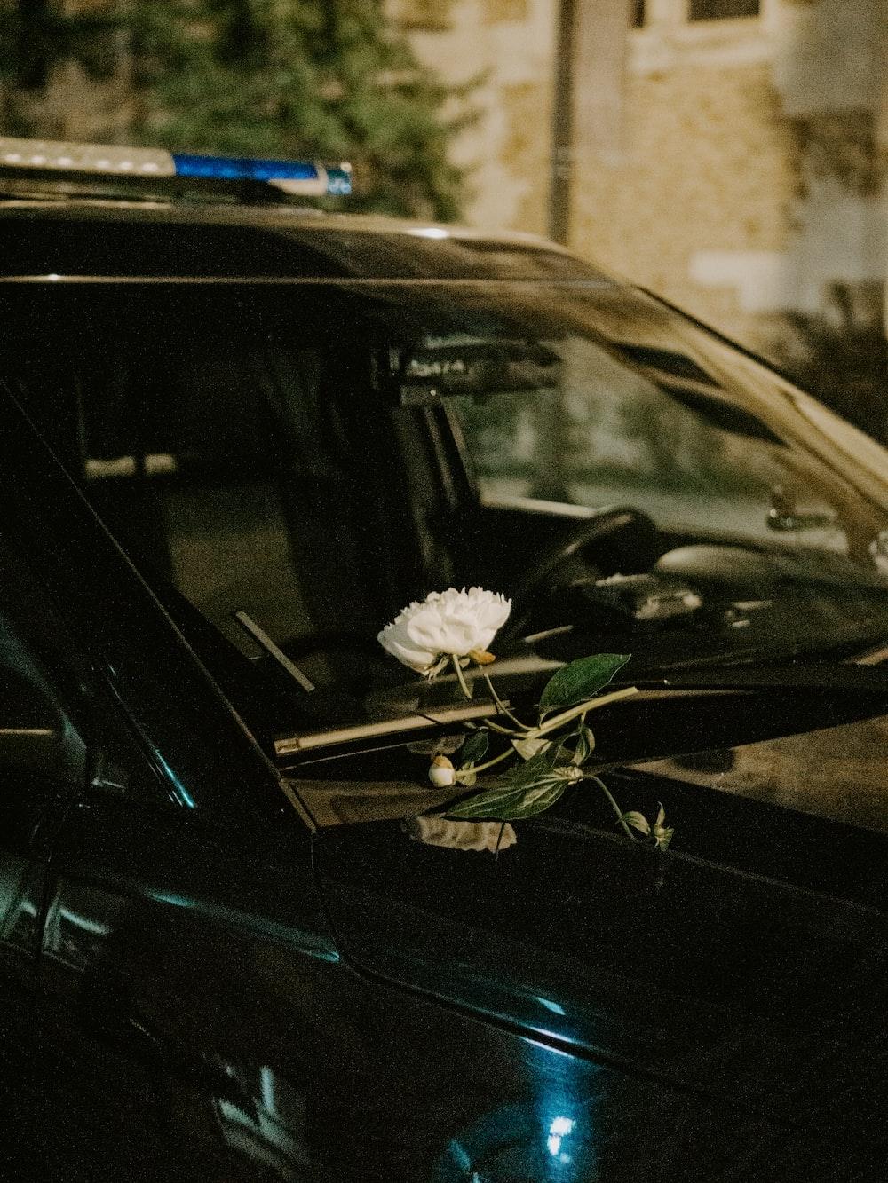 white flower on black car
