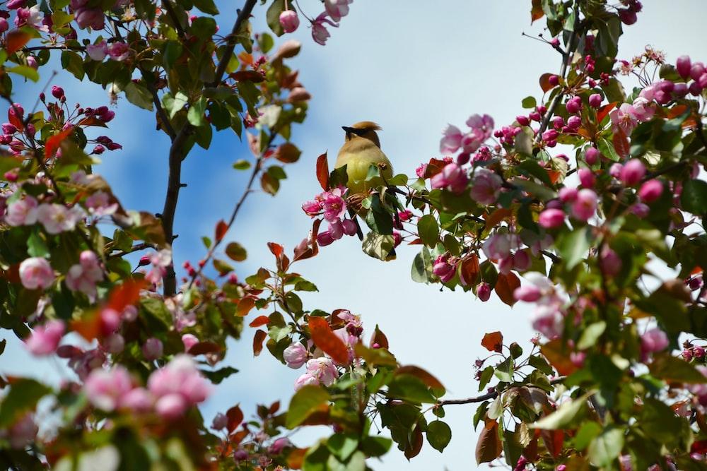 brown bird on pink flower during daytime