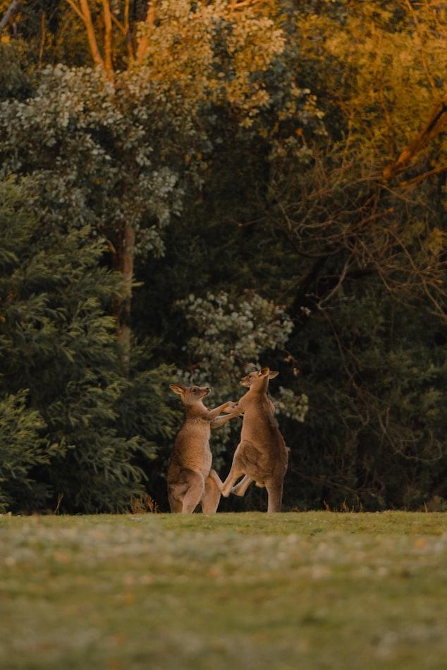 Due animali che combattono, via Unsplash