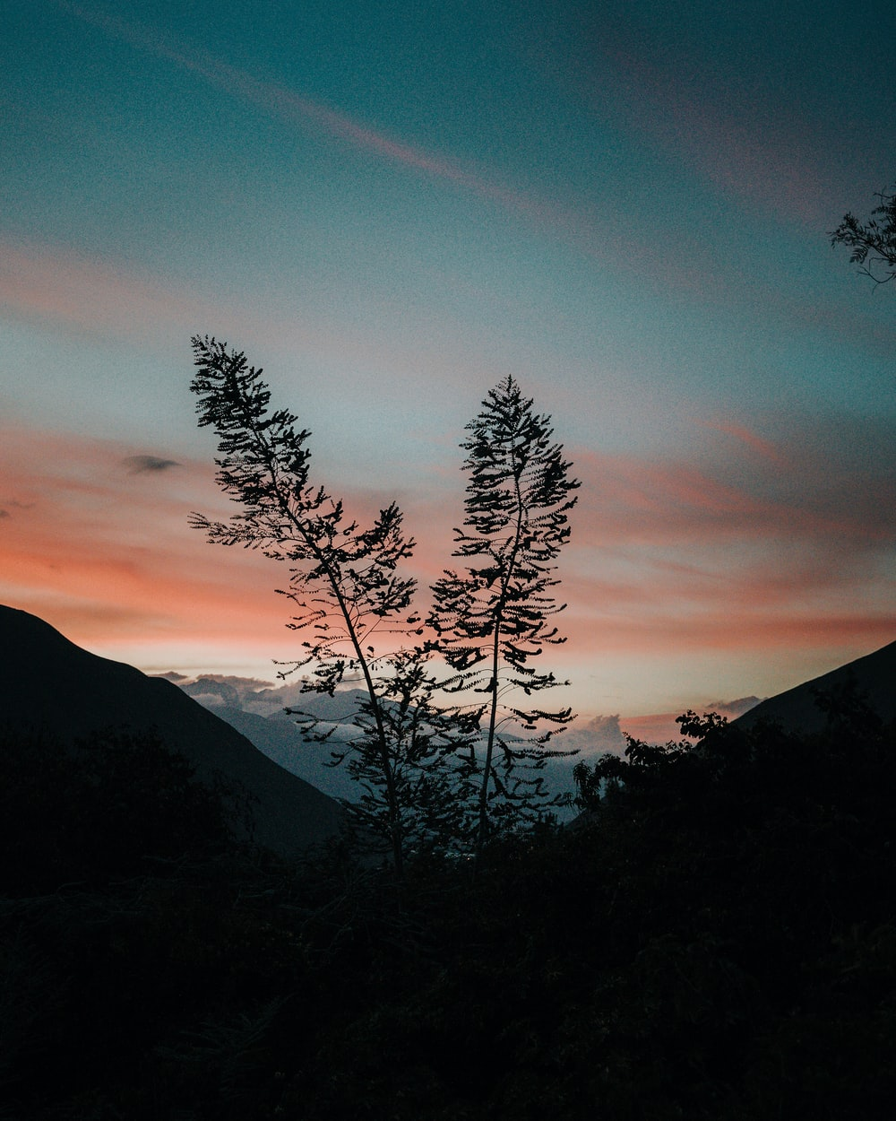 silhouette of trees on mountain during sunset