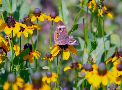 brown butterfly on yellow flower during daytime garland zoom background