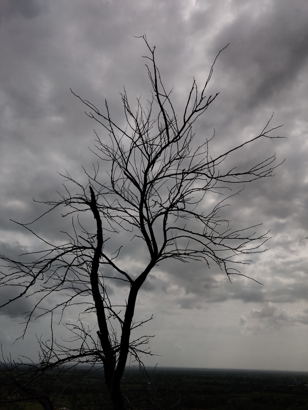 leafless tree under cloudy sky during daytime