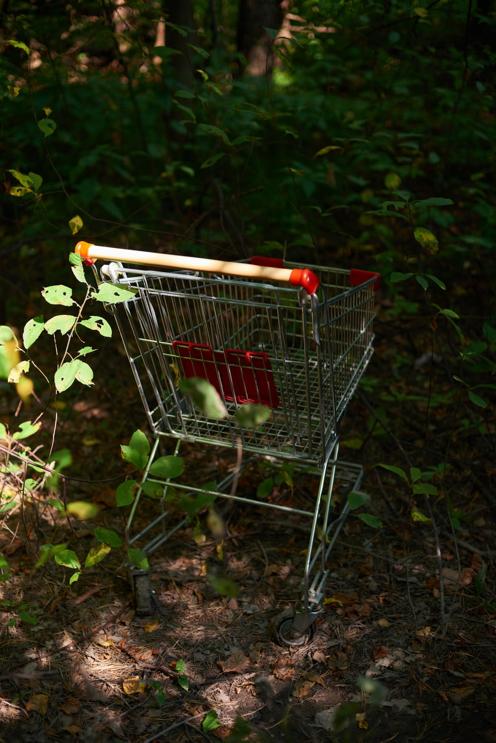 shopping cart on brown dried leaves