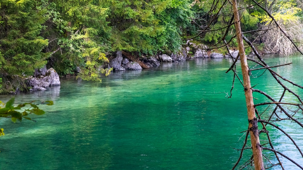 green body of water near green trees during daytime