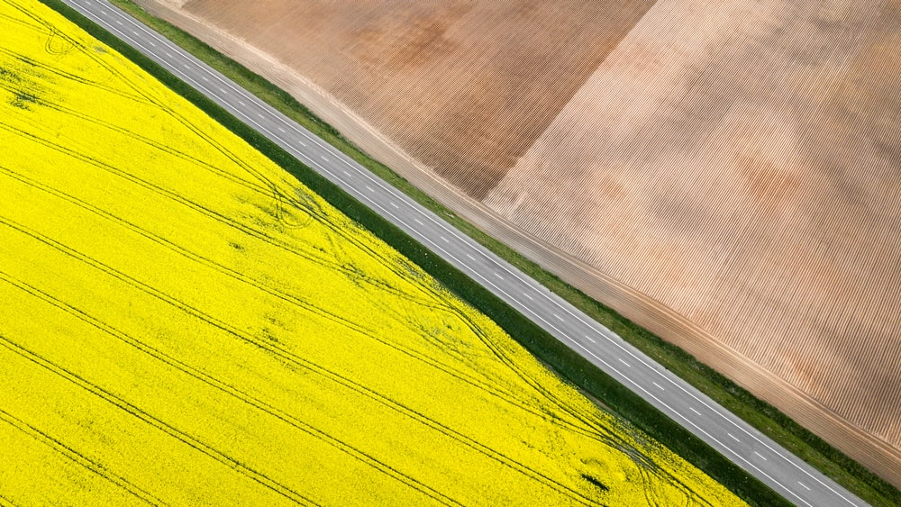 yellow and brown field during daytime