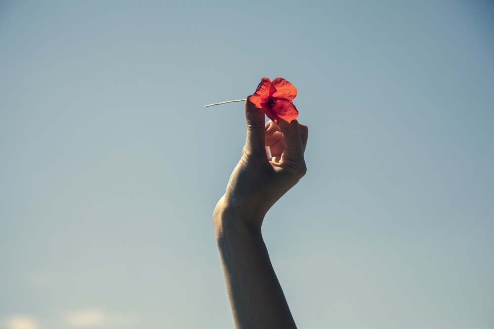 person holding red rose in front of blue sky