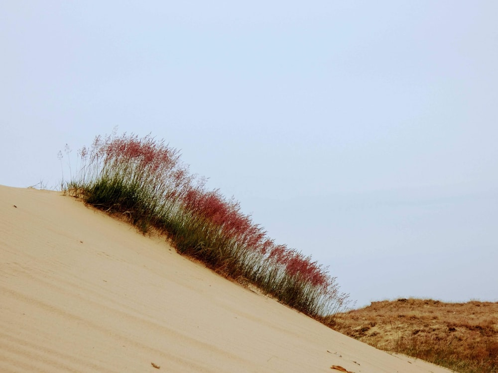 brown sand with green grass under white sky during daytime