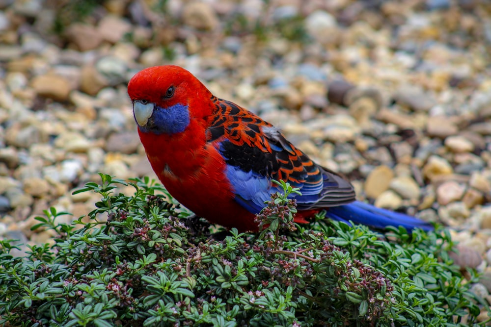 red and blue bird on green plant