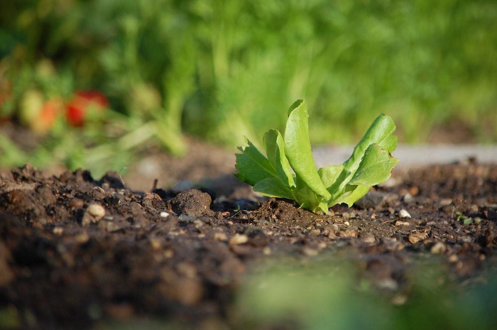 green plant on black soil