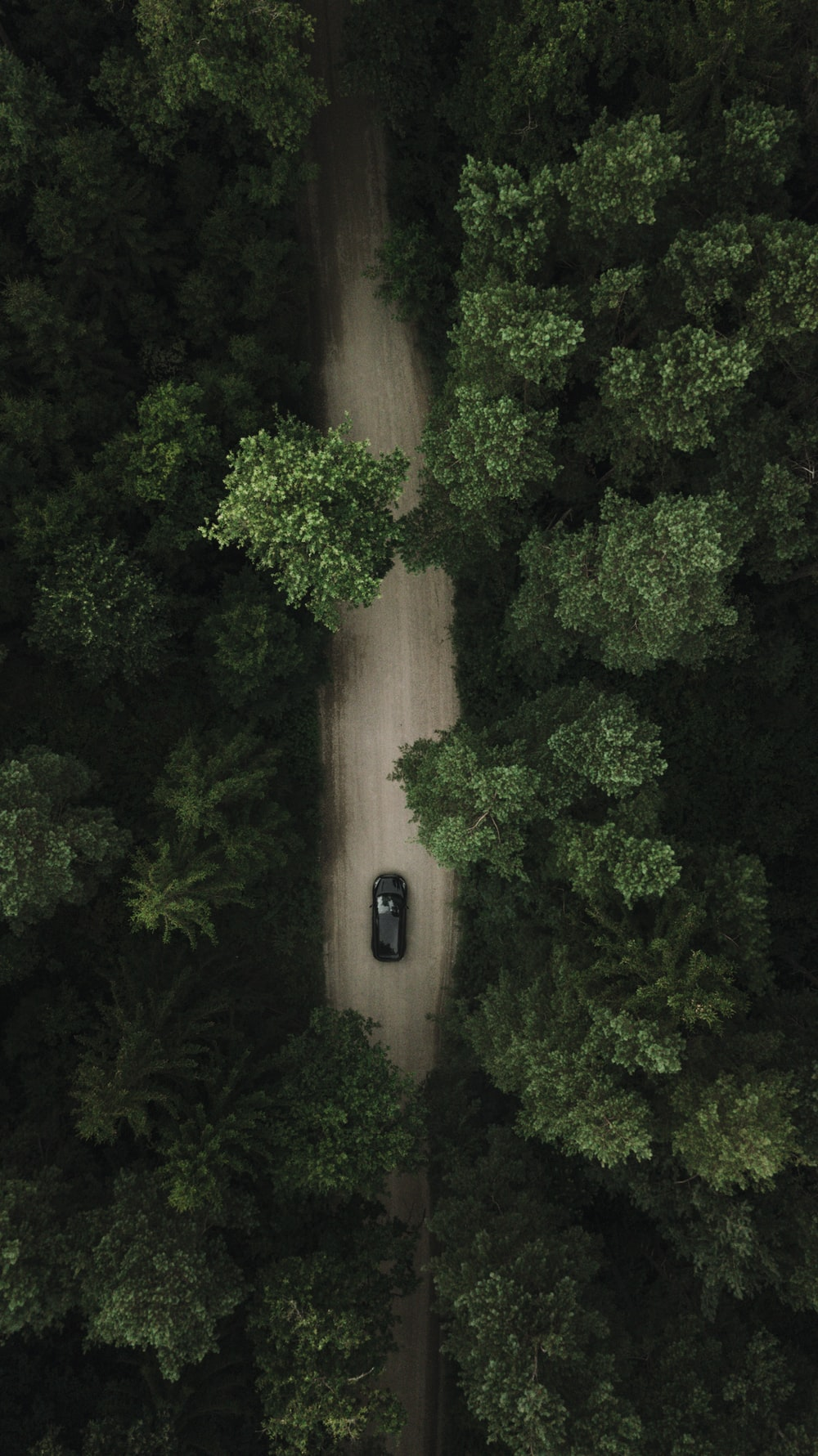 black car on road near green trees during daytime