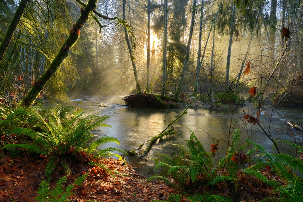 river in the middle of forest during daytime