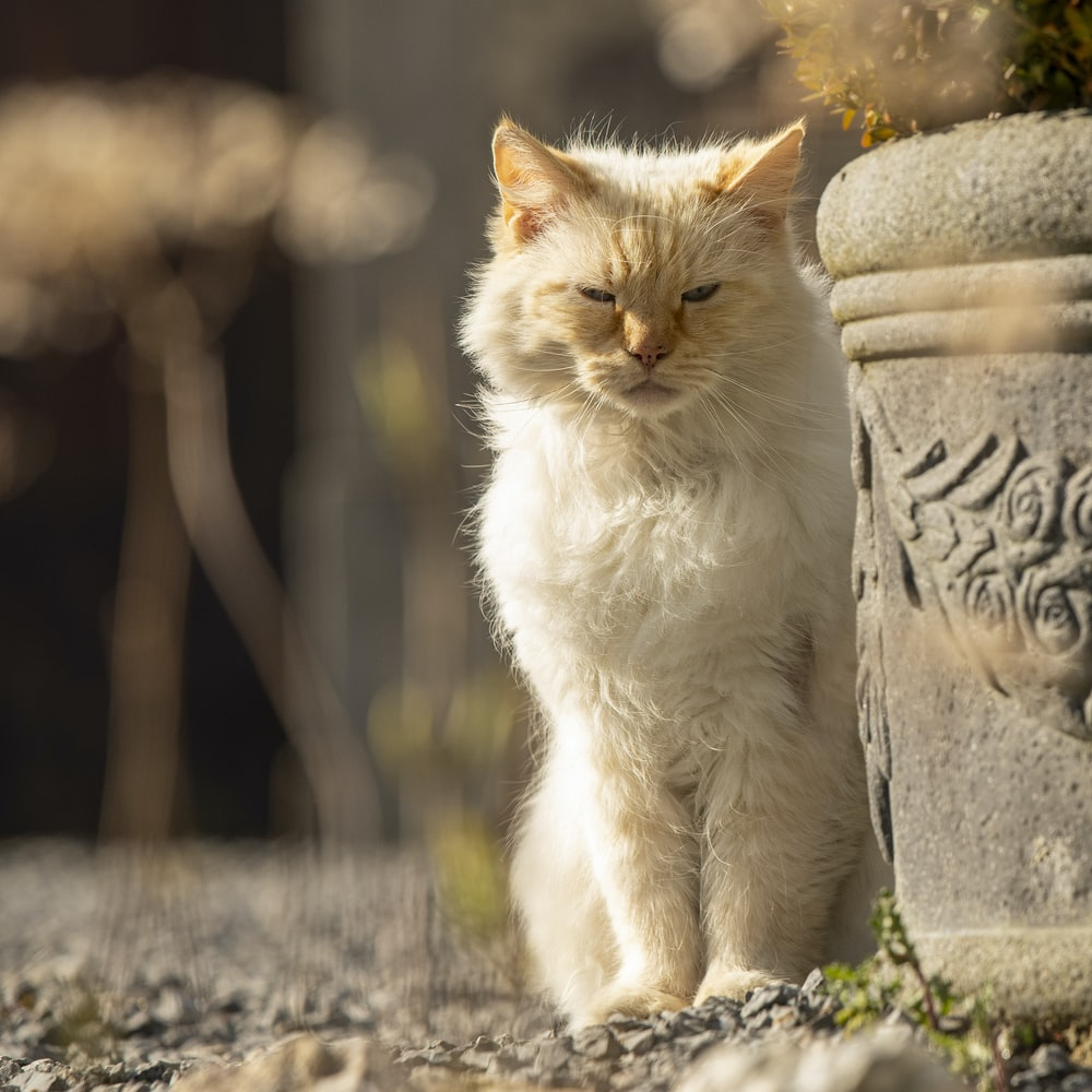 white and brown cat sitting on gray concrete surface