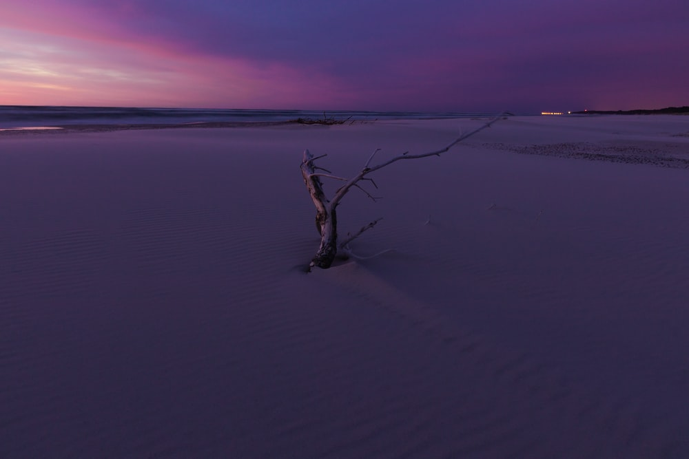 brown tree branch on white sand during sunset