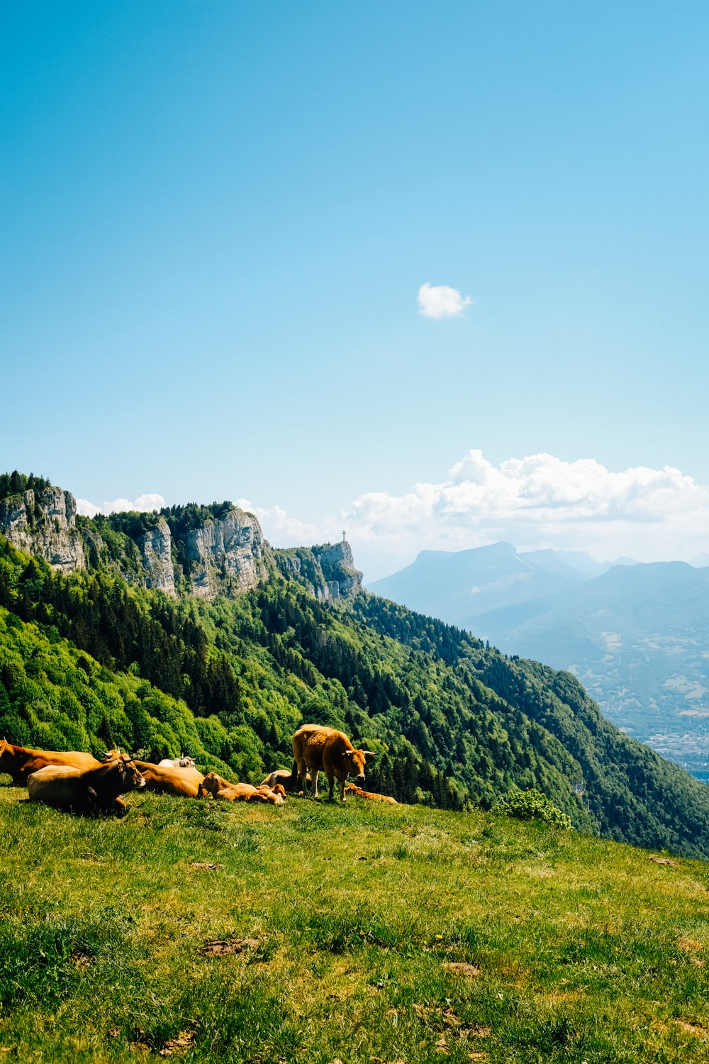 horses on green grass field near mountain under blue sky during daytime