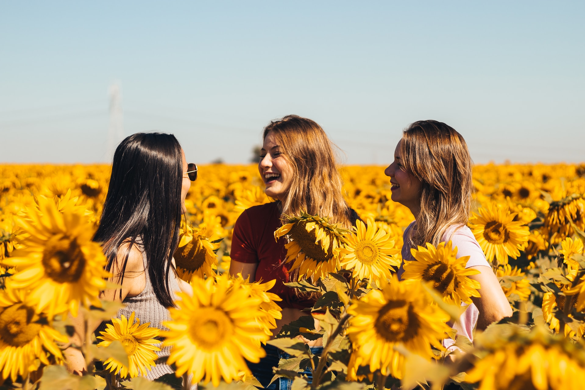 3 women in yellow sunflower field during daytime