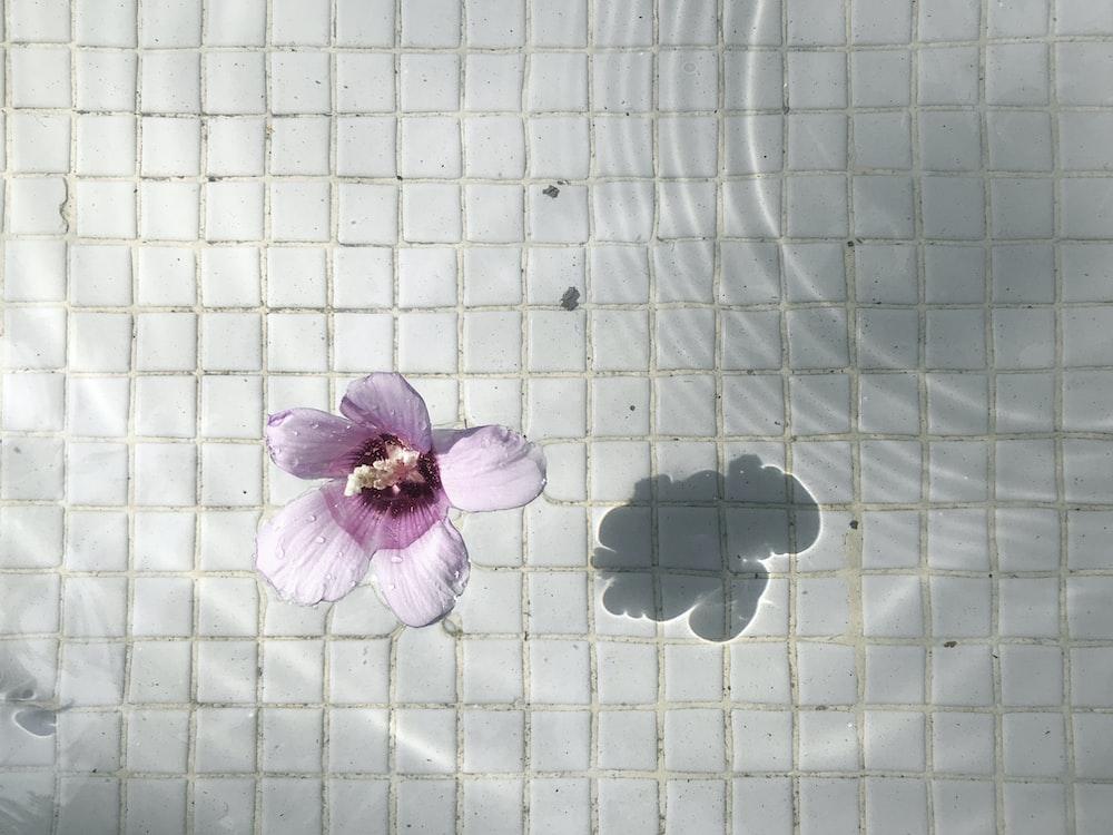 purple and white flower on white ceramic tiles