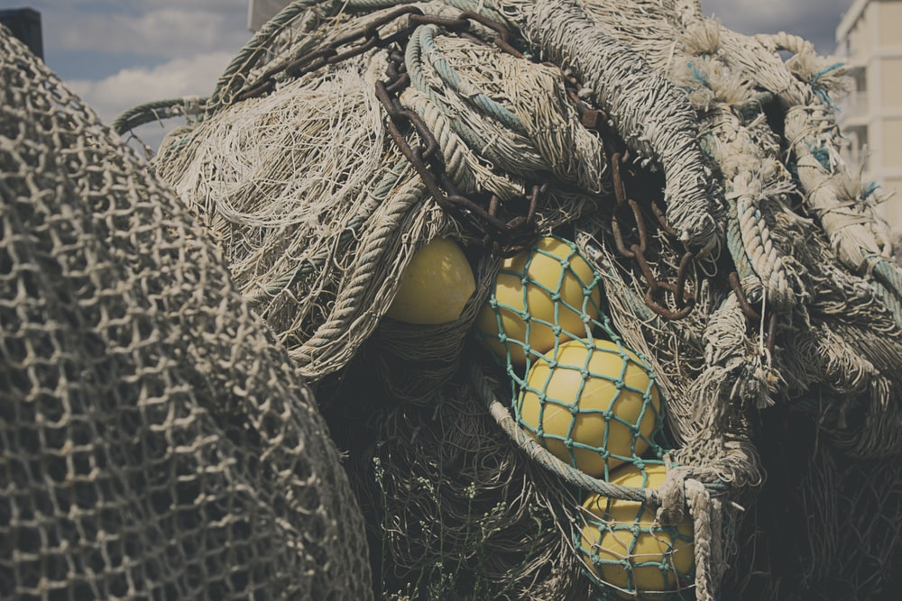 yellow round fruits on brown rope