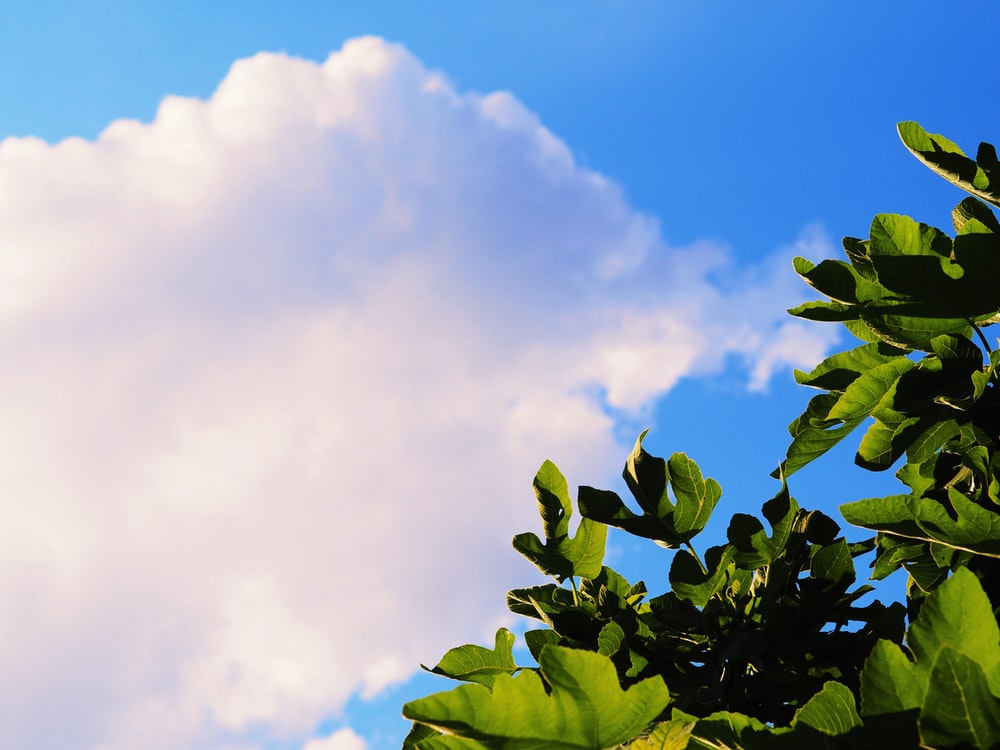 green leaves under blue sky during daytime