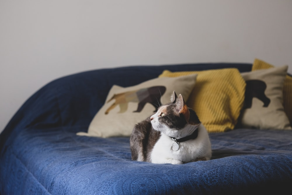 white and black cat on blue textile