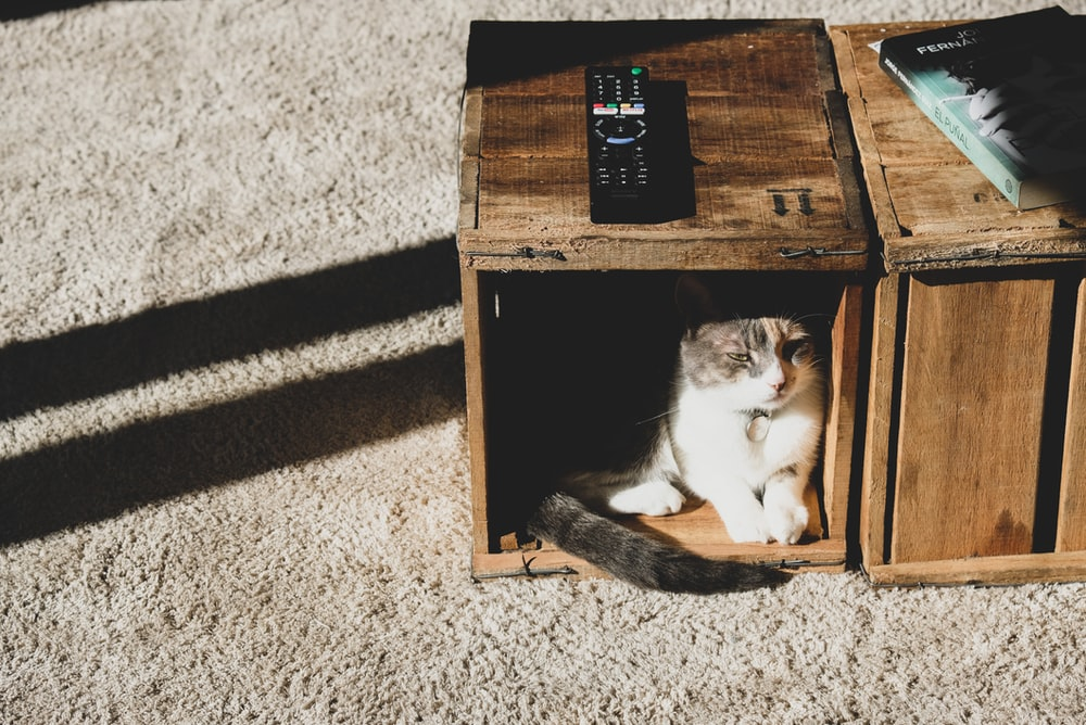 white and black cat on brown wooden box