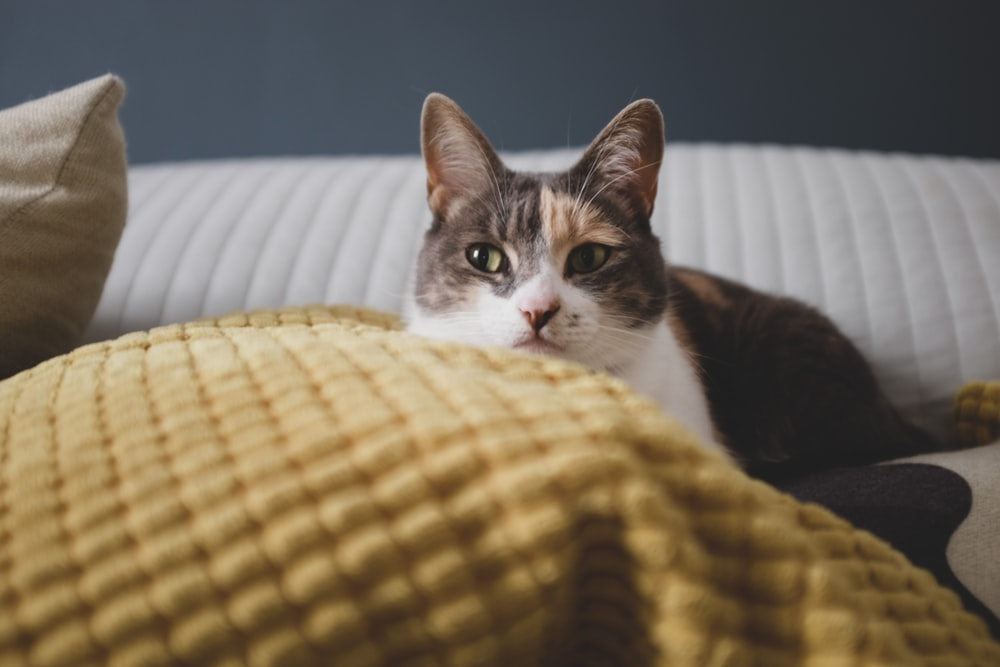 black and white cat on yellow and white textile