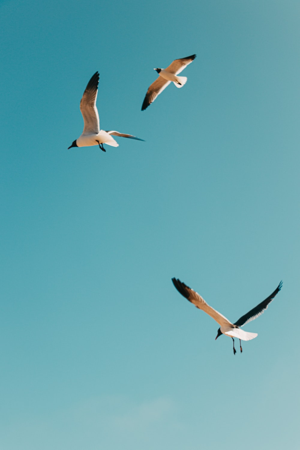 white and black birds flying under blue sky during daytime