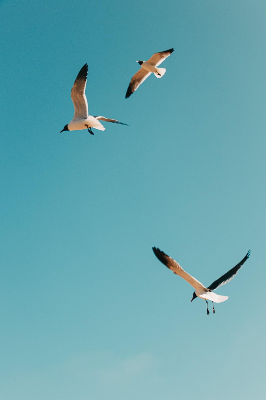 white and black birds flying under blue sky during daytime