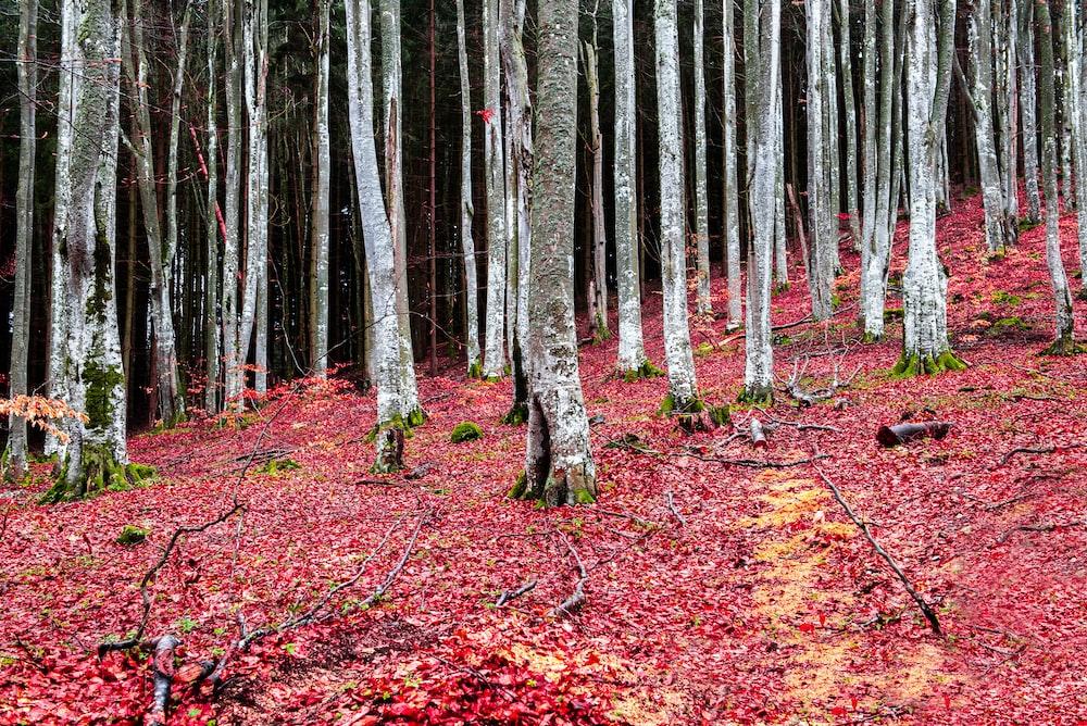 brown trees on brown leaves