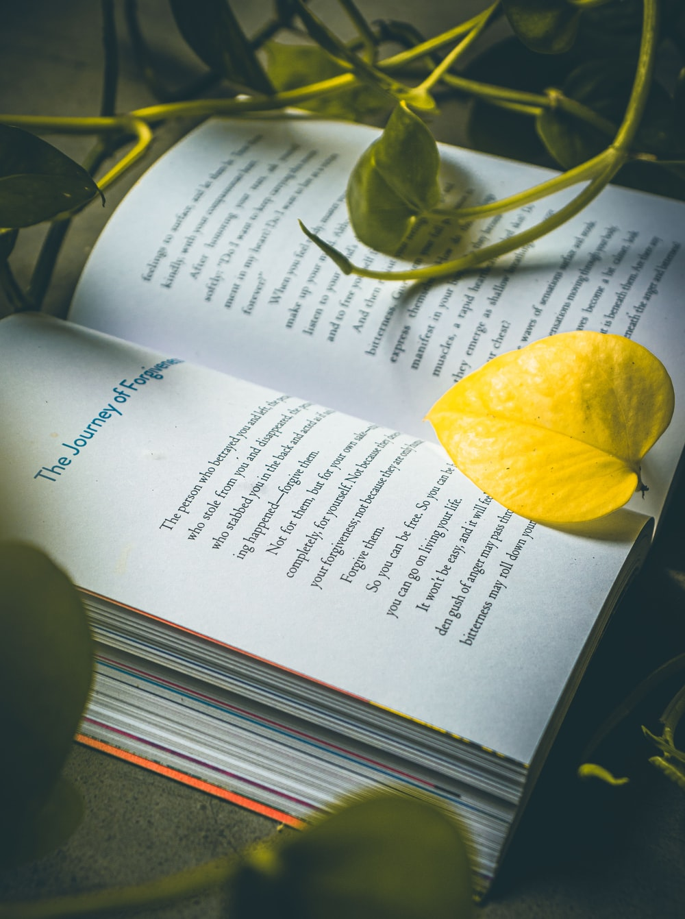 yellow lemon on white book page