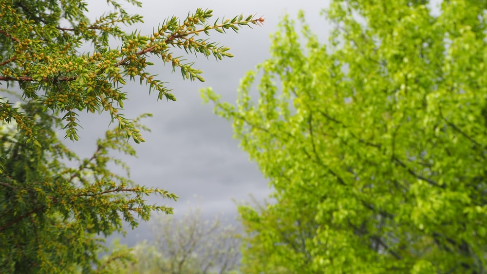 green tree under white clouds during daytime