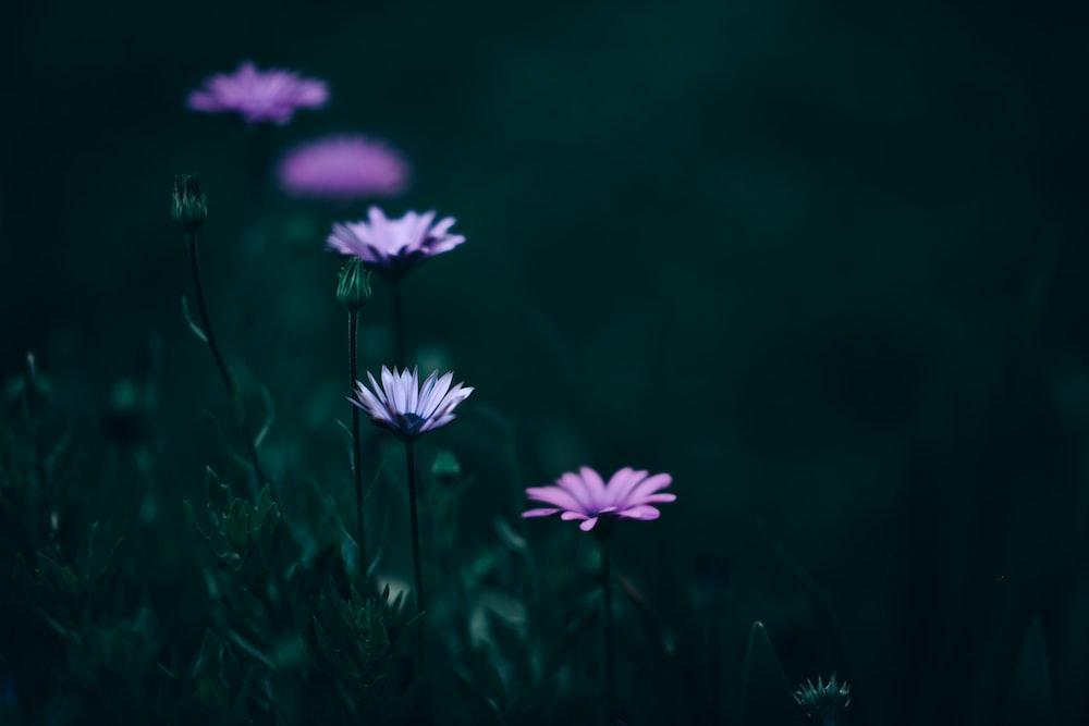 purple flowers on green grass