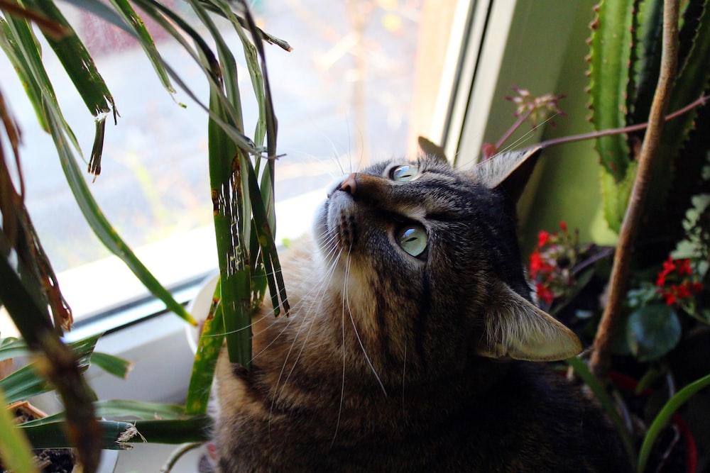 brown tabby cat near green plant