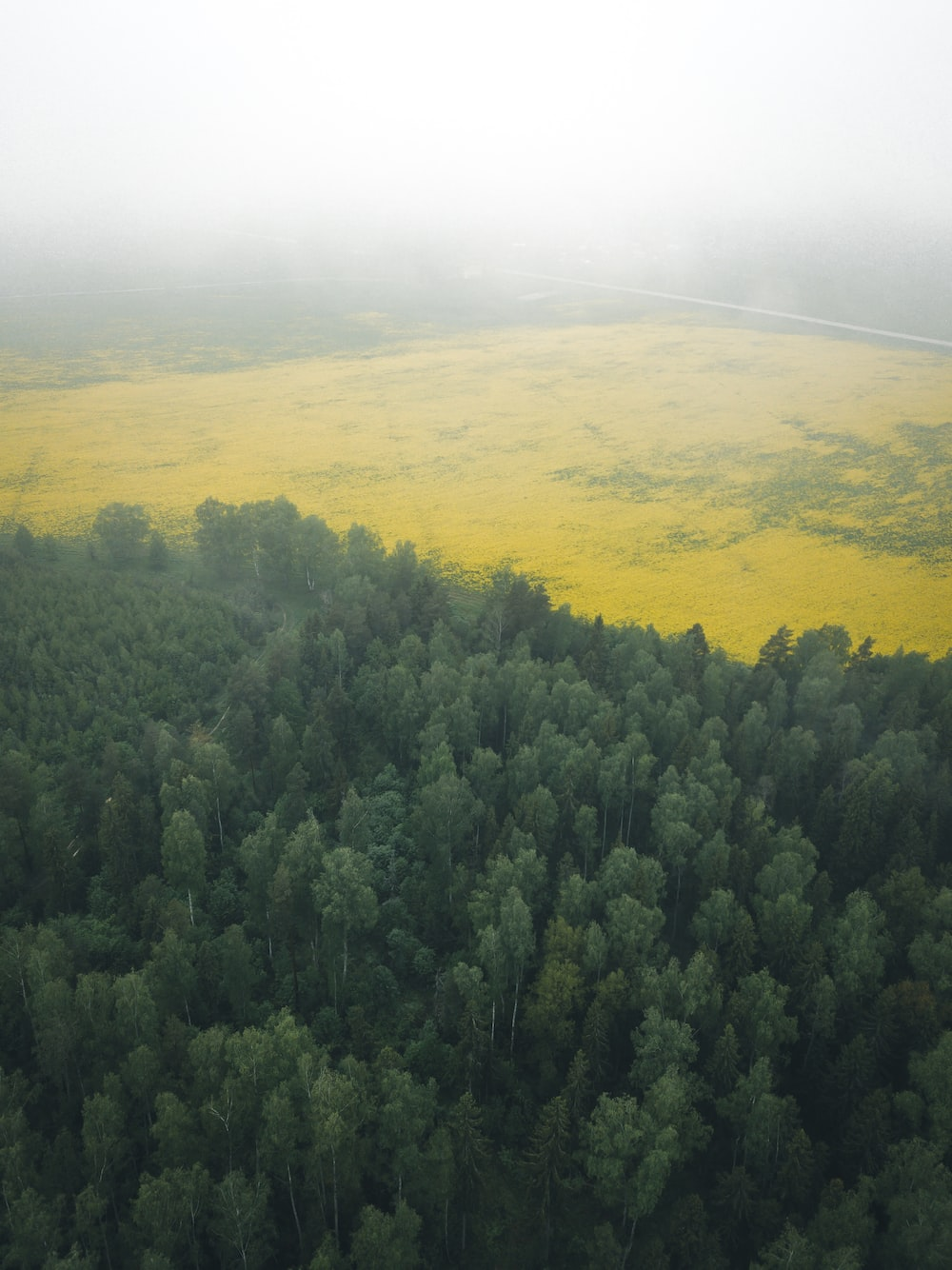 green trees on yellow field during daytime