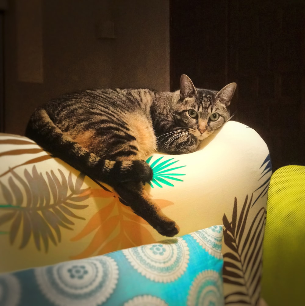 brown tabby cat on white and green floral sofa