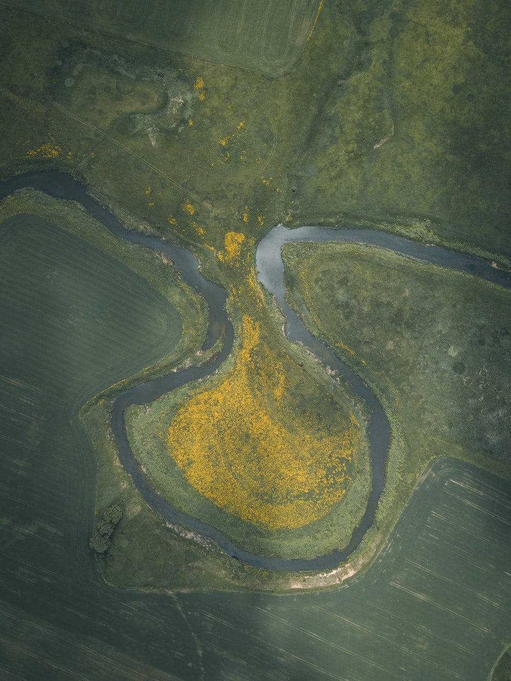 aerial view of green and yellow river