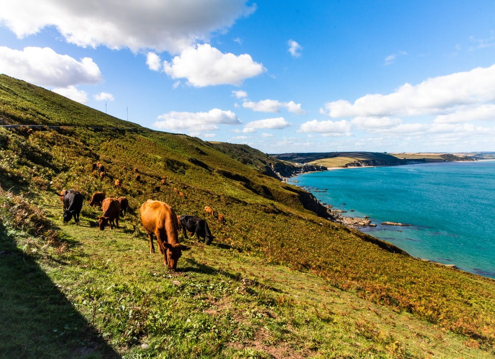 horses on green grass field near body of water during daytime