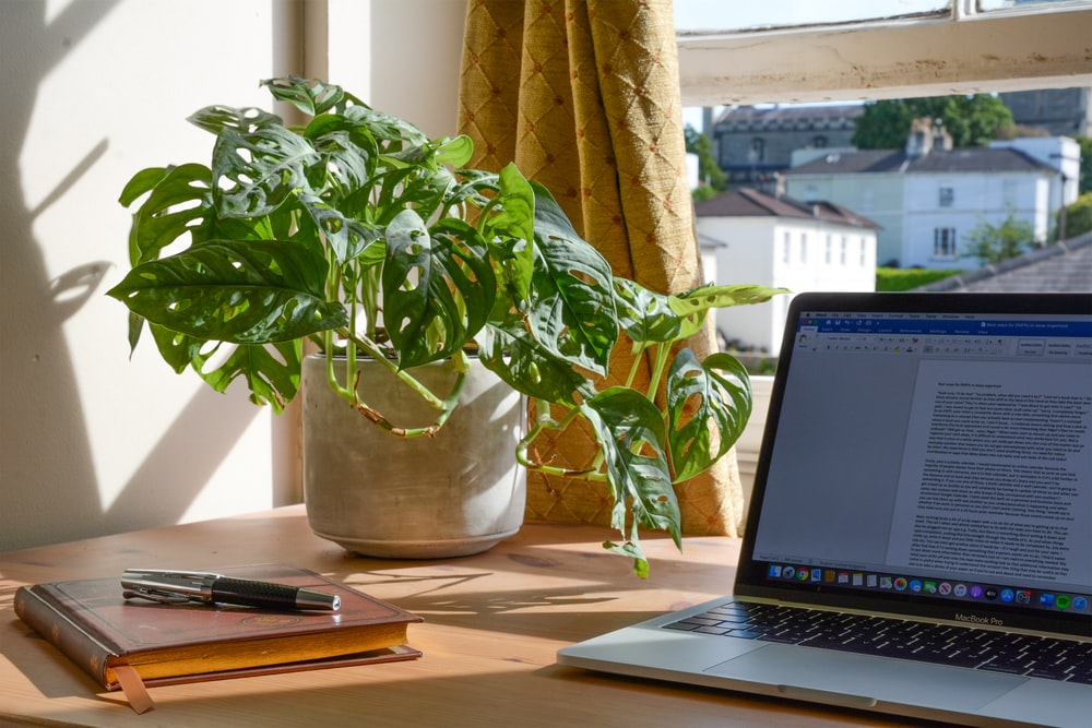 macbook pro beside green plant on table