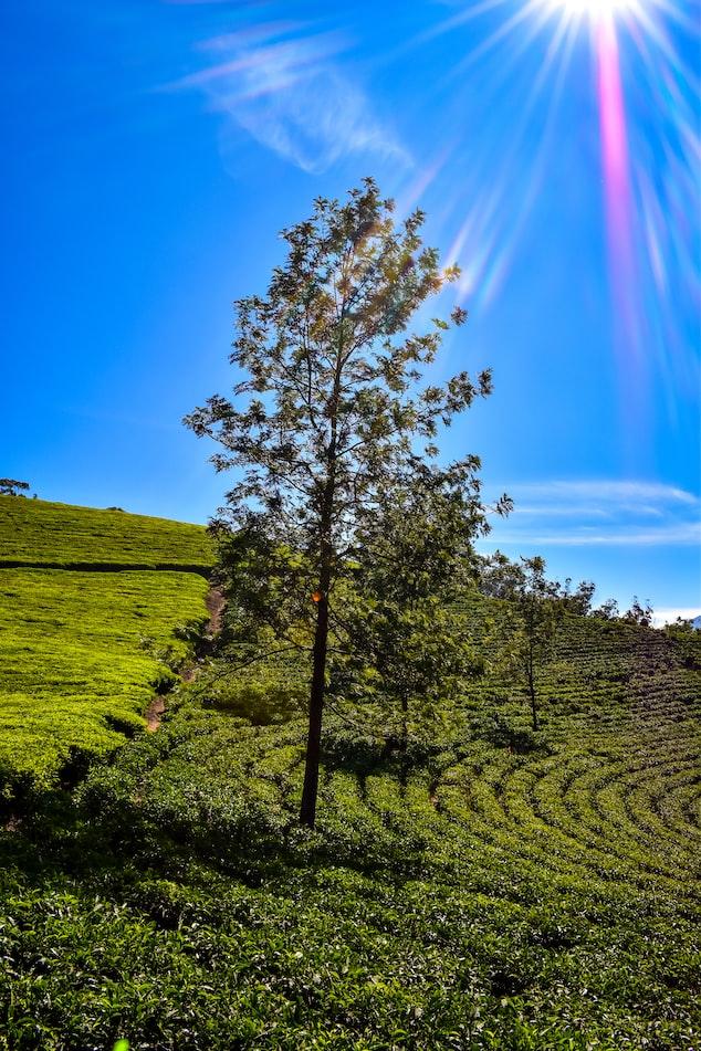 A click of Munnar in Kerala