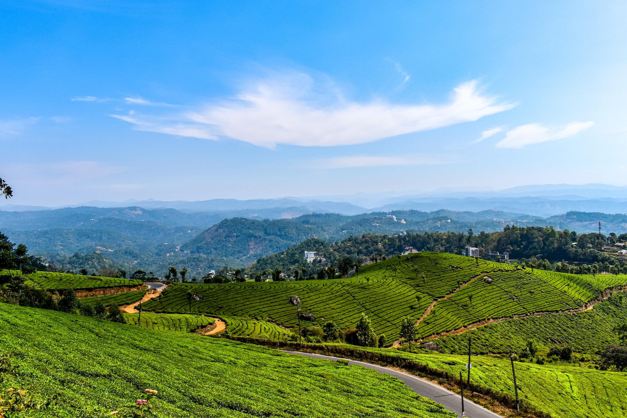 Munnar Tea Garden, Munnar, Kerala, India