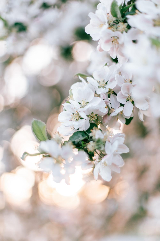 white flowers in tilt shift lens