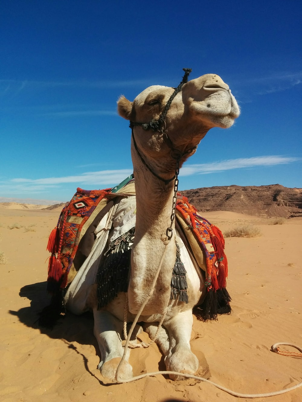 brown camel on brown sand during daytime