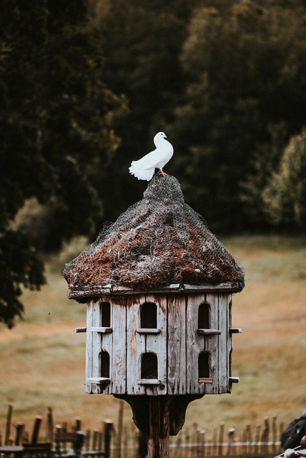 white bird flying over brown wooden bird house during daytime