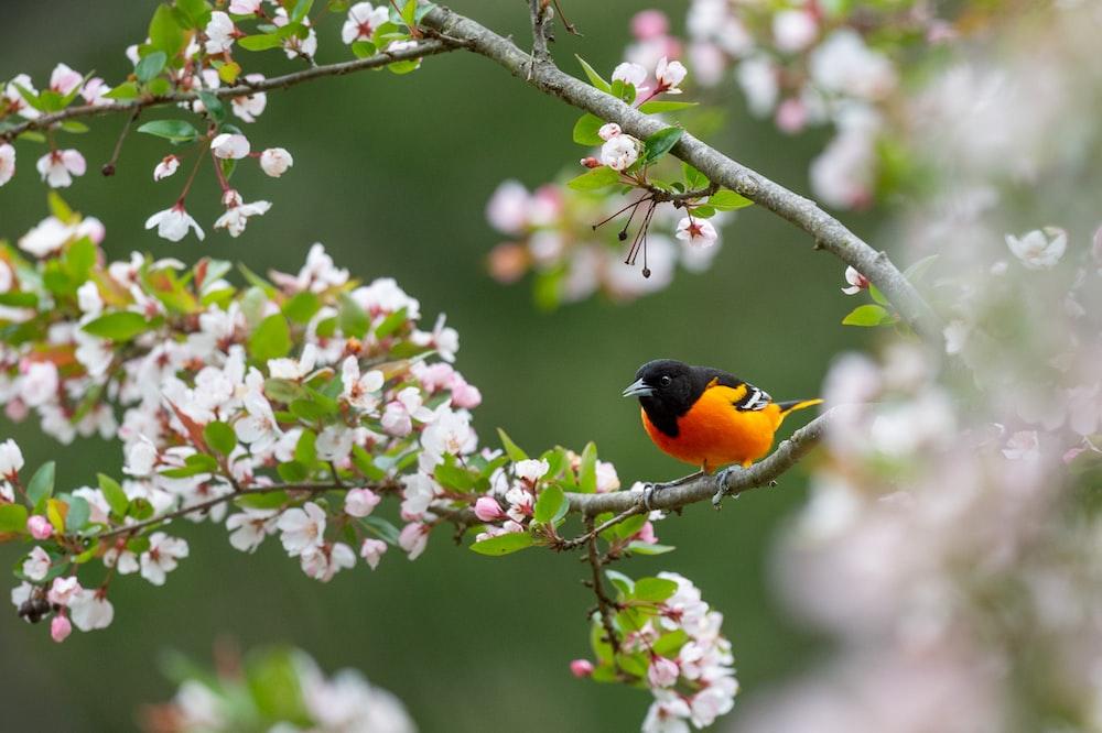 orange and black bird on pink flower