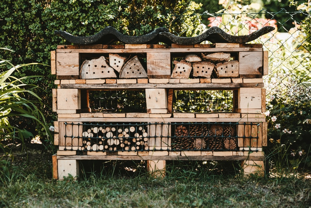 black berries on brown wooden crate